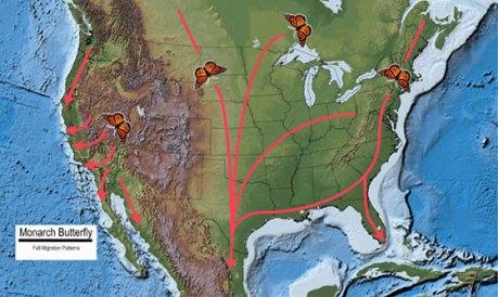 15 fallmigrationmap